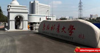 Trường Đại học Lâm nghiệp Đông Bắc
